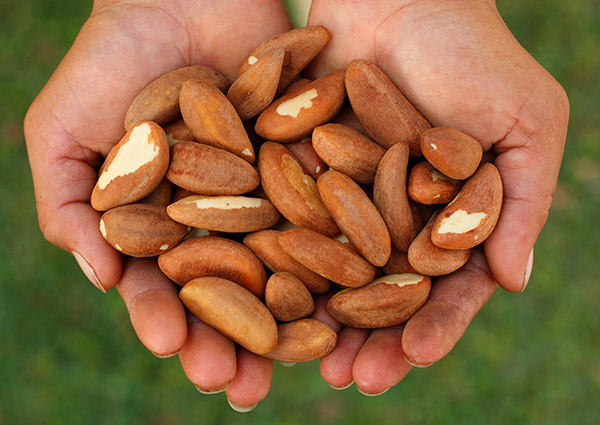 Brazil Nuts May Be The Cure To Your Problems!